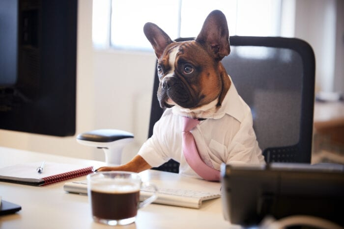 office_dogs