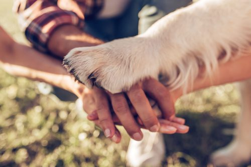 family-hands-with-dog-paw